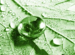 Close-up of Water on a Leaf